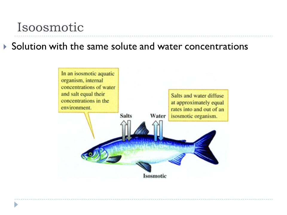 Isoosmotic Solution with the same solute and water concentrations