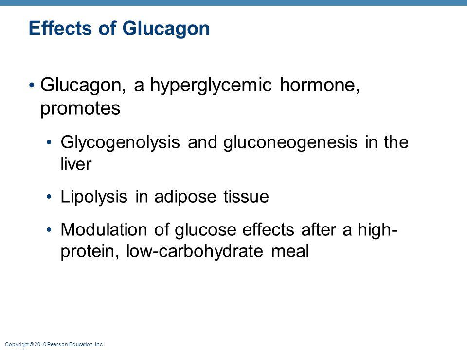Glucagon, a hyperglycemic hormone, promotes