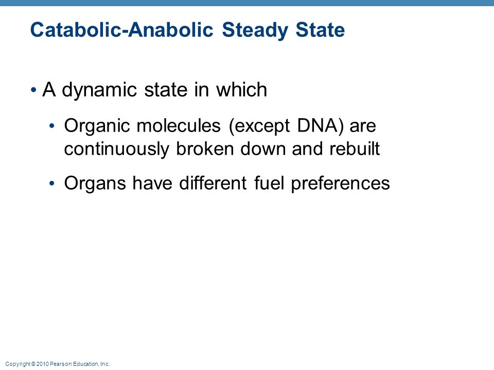 Catabolic-Anabolic Steady State