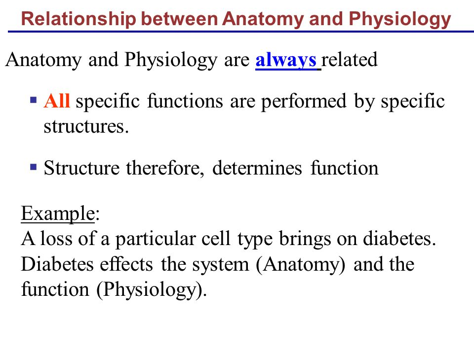 Amazing What Is Physiology And Anatomy Photo - Anatomy Ideas ...