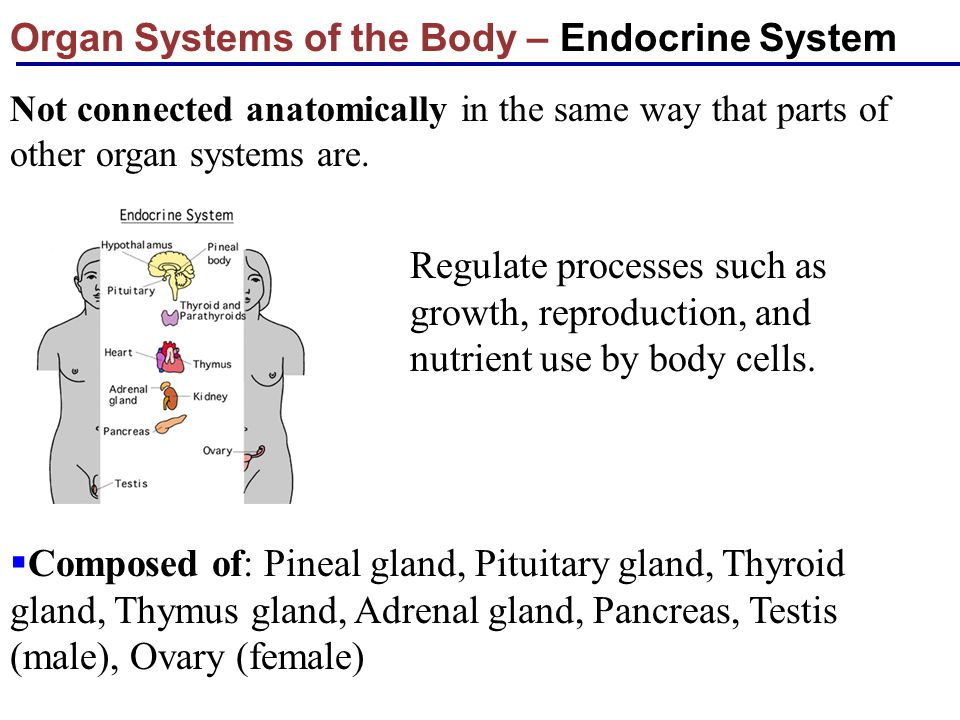 Organ Systems of the Body – Endocrine System