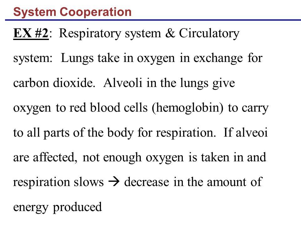 EX #2: Respiratory system & Circulatory