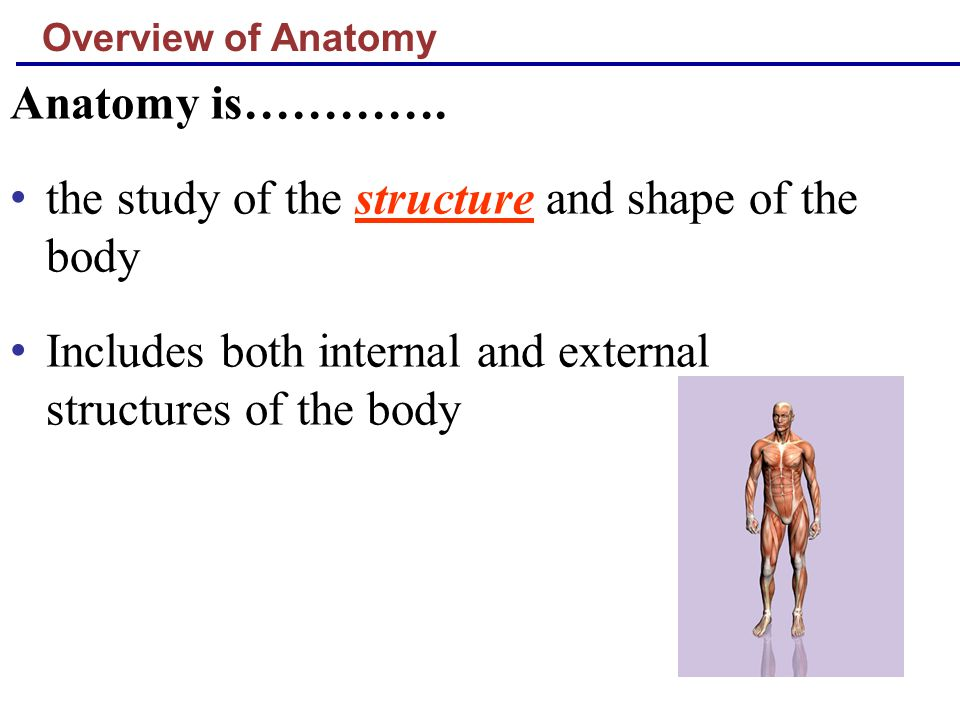 the study of the structure and shape of the body
