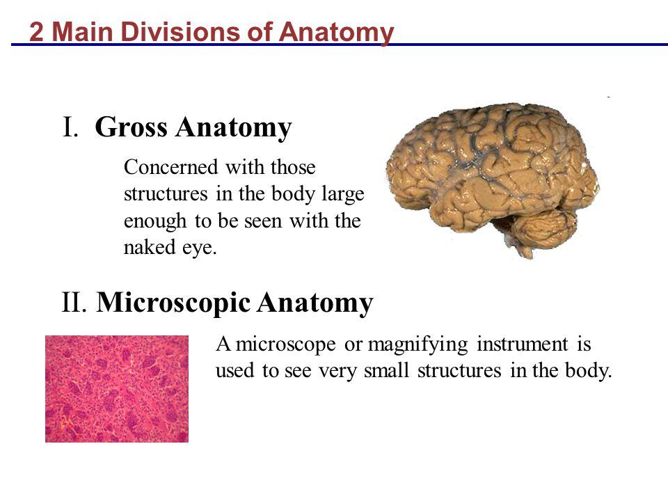 II. Microscopic Anatomy