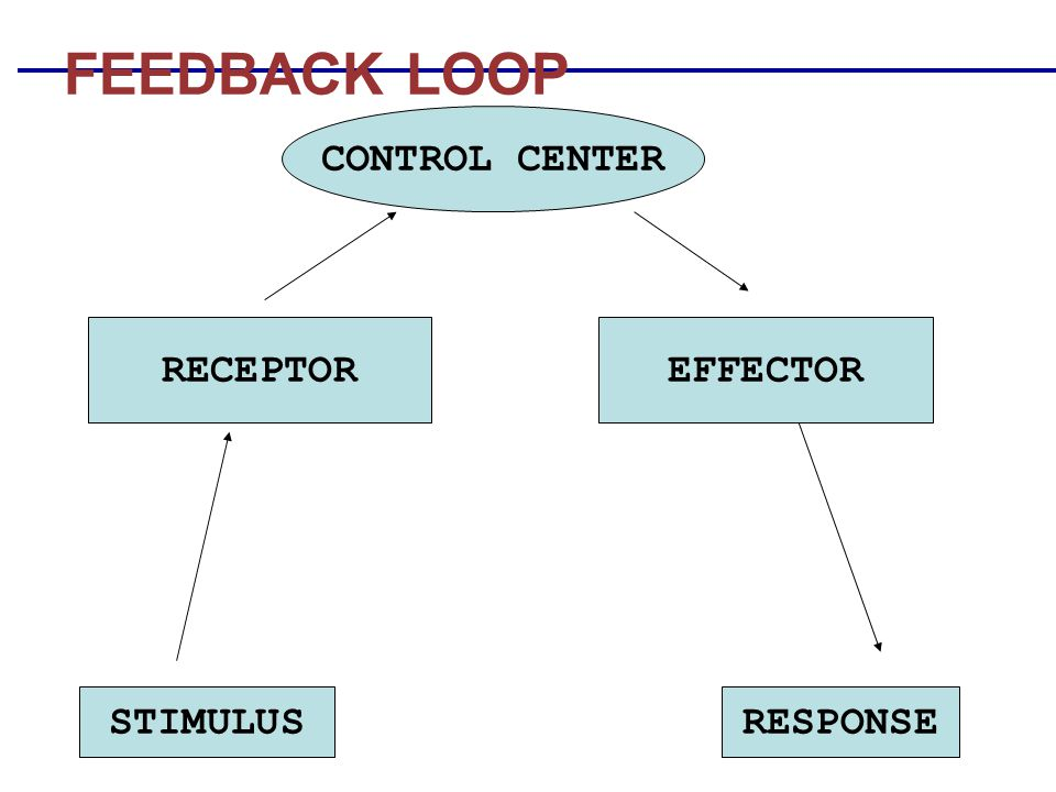 FEEDBACK LOOP CONTROL CENTER RECEPTOR EFFECTOR STIMULUS RESPONSE