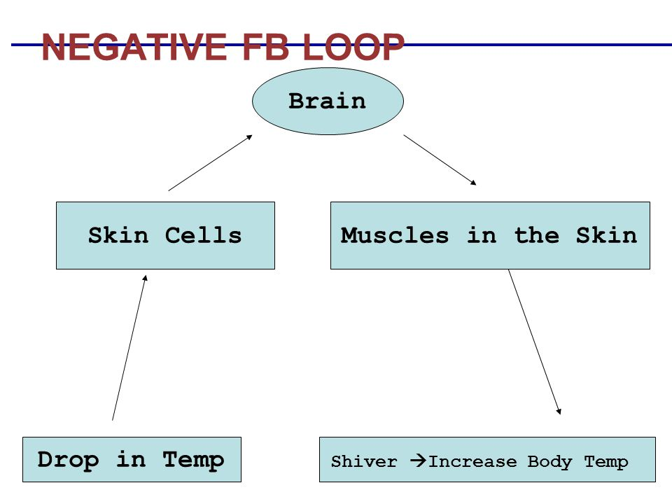 Shiver Increase Body Temp