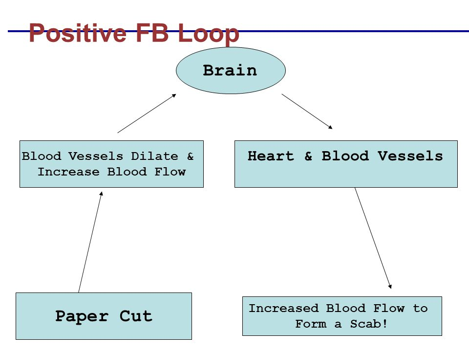 Increased Blood Flow to
