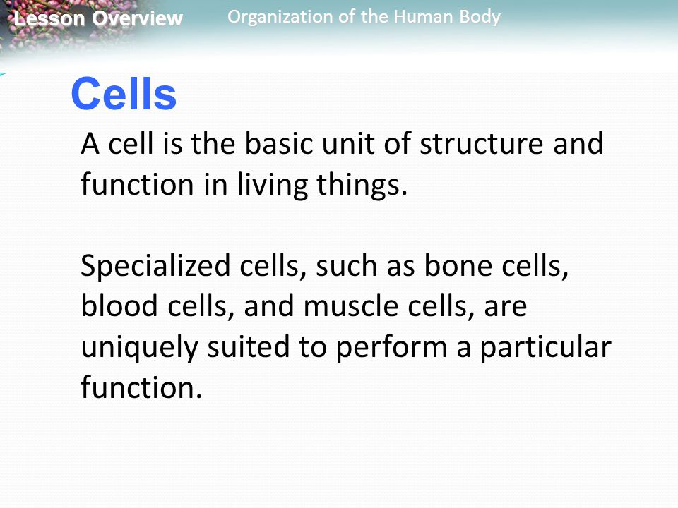 Cells A cell is the basic unit of structure and function in living things.