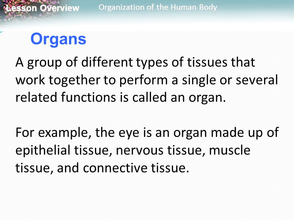 Organs A group of different types of tissues that work together to perform a single or several related functions is called an organ.
