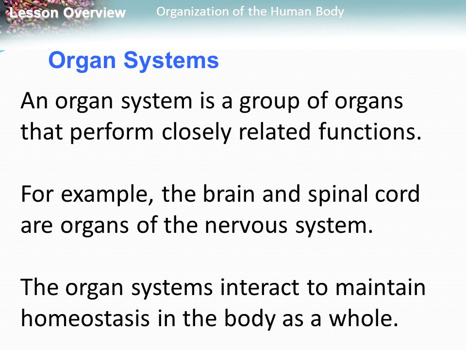Organ Systems An organ system is a group of organs that perform closely related functions.