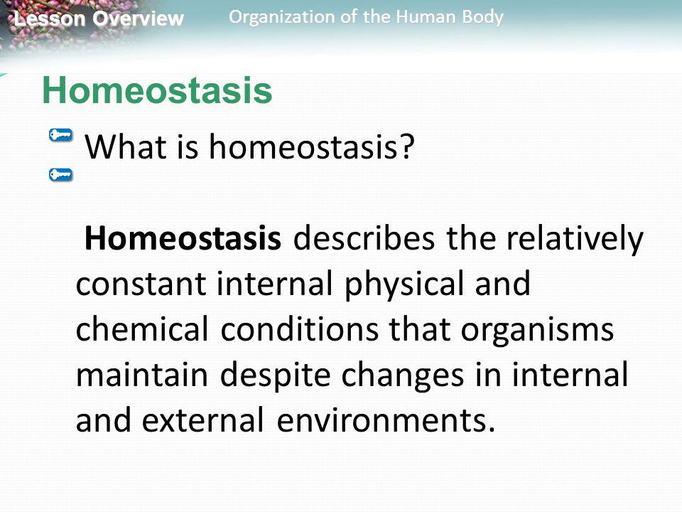 Homeostasis What is homeostasis