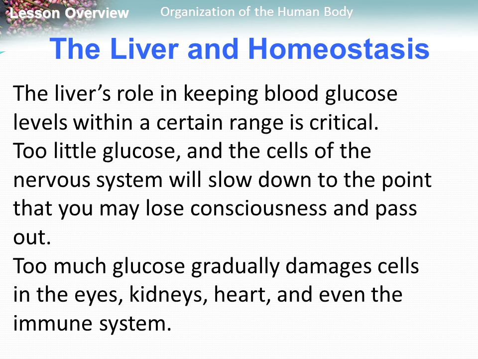 The Liver and Homeostasis