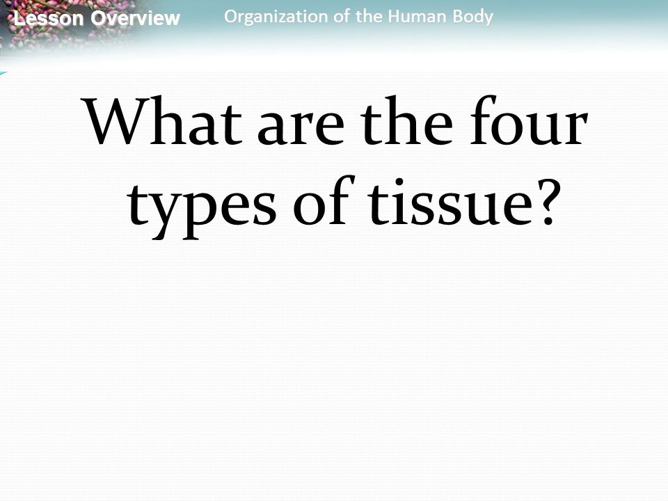What are the four types of tissue
