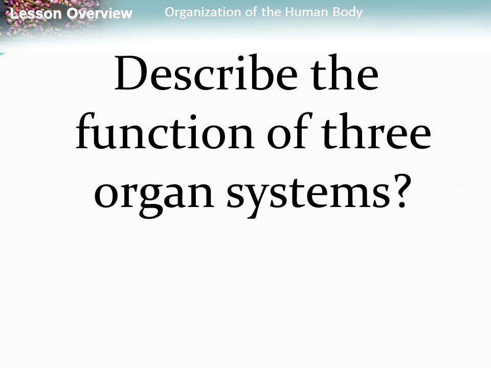 Describe the function of three organ systems