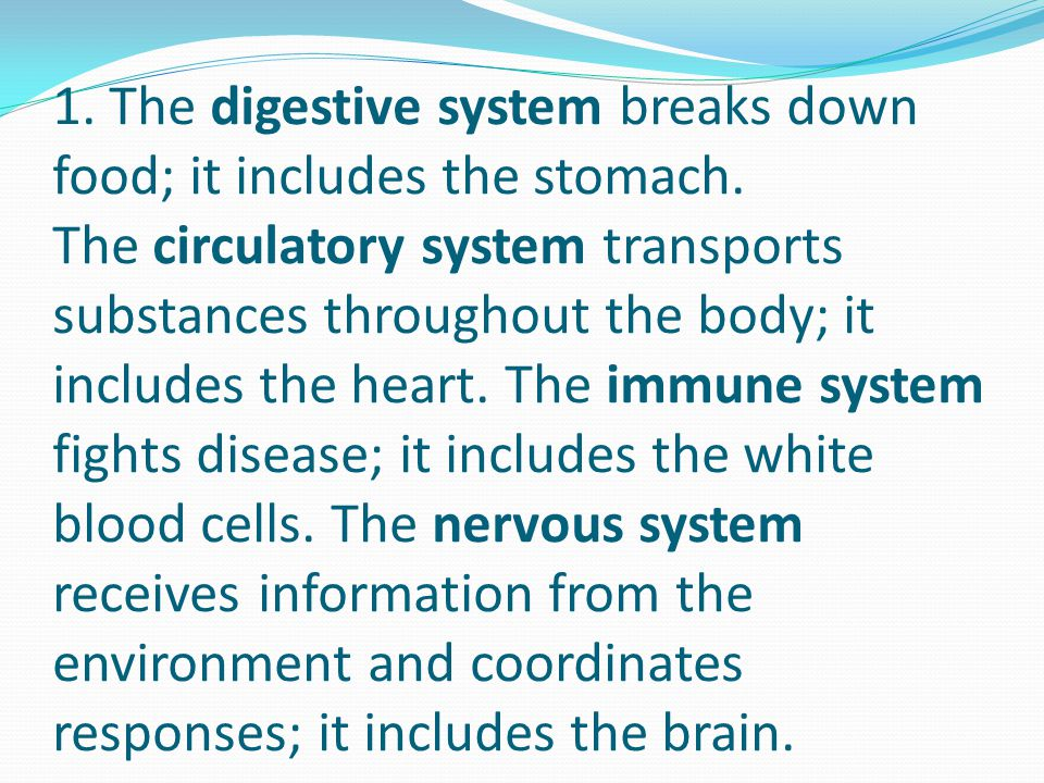 1. The digestive system breaks down food; it includes the stomach