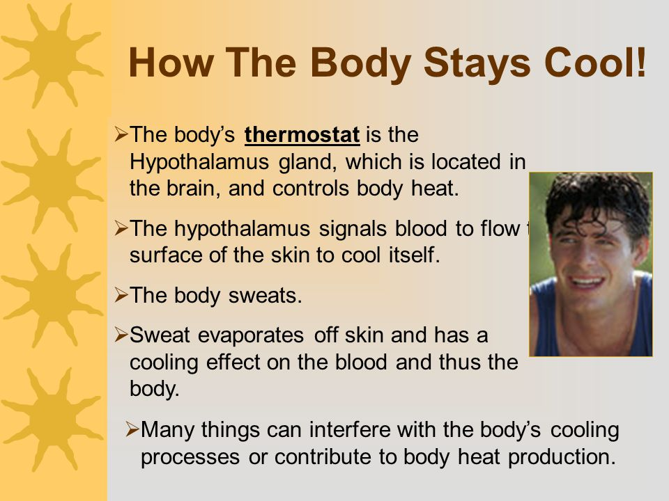 How The Body Stays Cool! The body's thermostat is the Hypothalamus gland, which is located in the brain, and controls body heat.