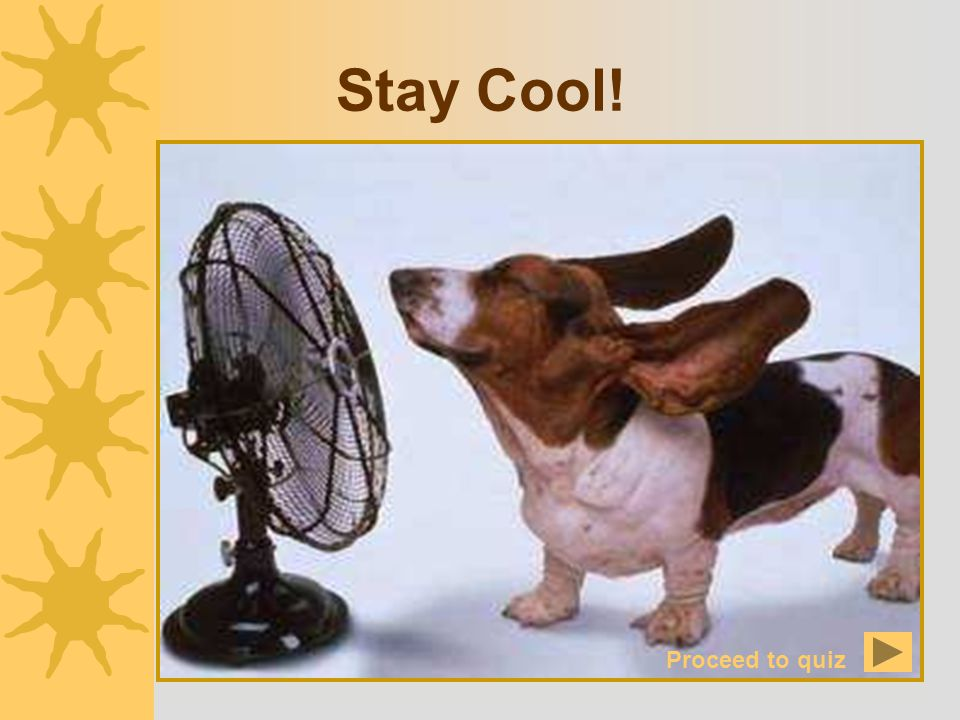 Stay Cool! Proceed to quiz
