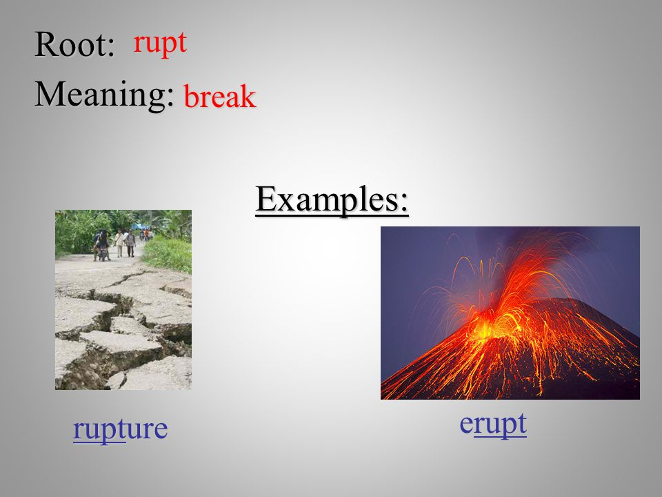 Root: rupt Meaning: break Examples: erupt rupture