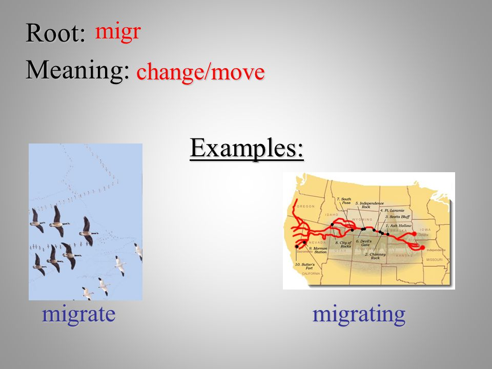 Root: migr Meaning: change/move Examples: migrate migrating