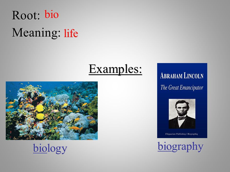 Root: bio Meaning: life Examples: biography biology