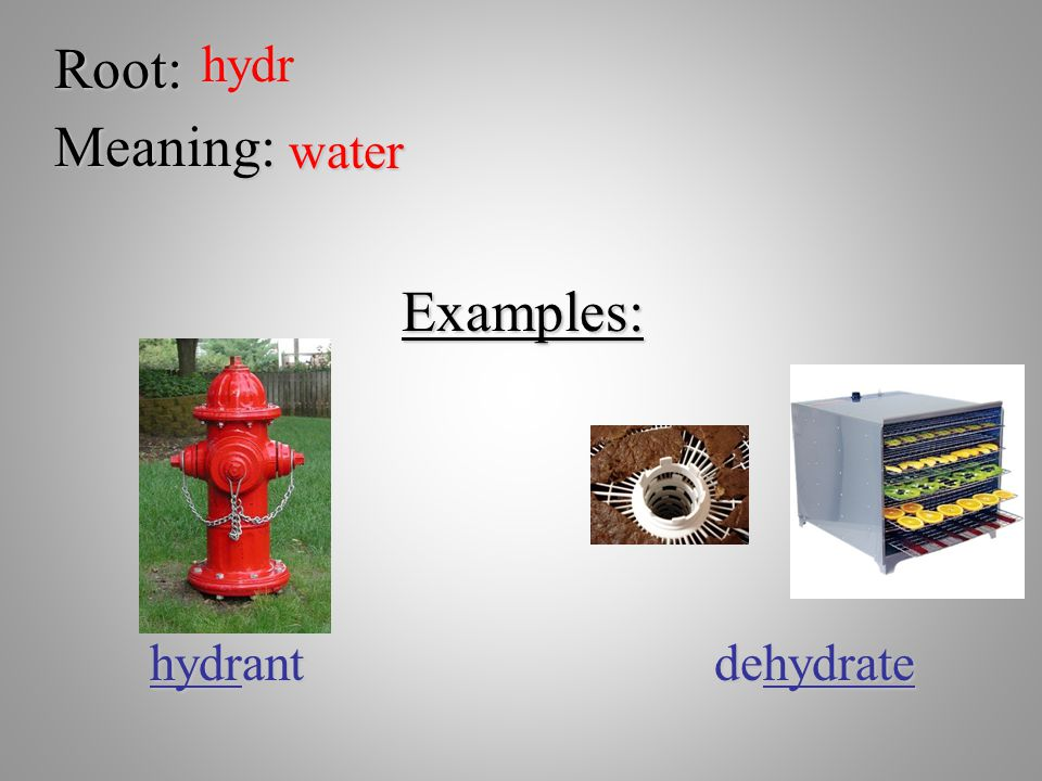 Root: hydr Meaning: water Examples: hydrant dehydrate