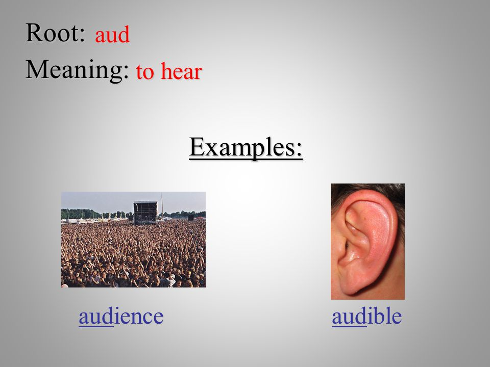 Root: aud Meaning: to hear Examples: audience audible