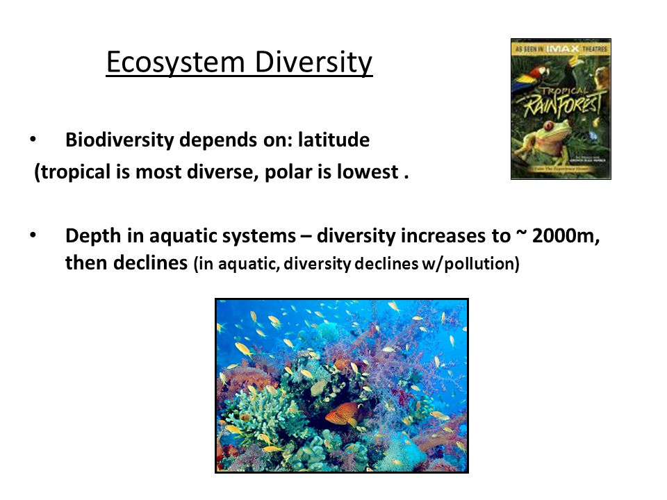 Ecosystem Diversity Biodiversity depends on: latitude