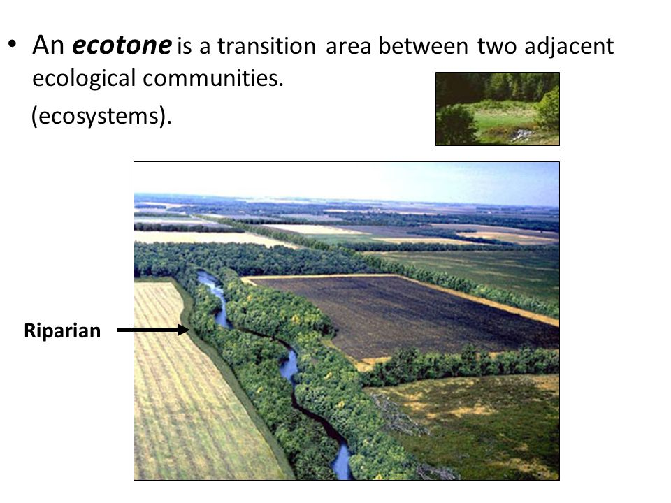 An ecotone is a transition area between two adjacent ecological communities.