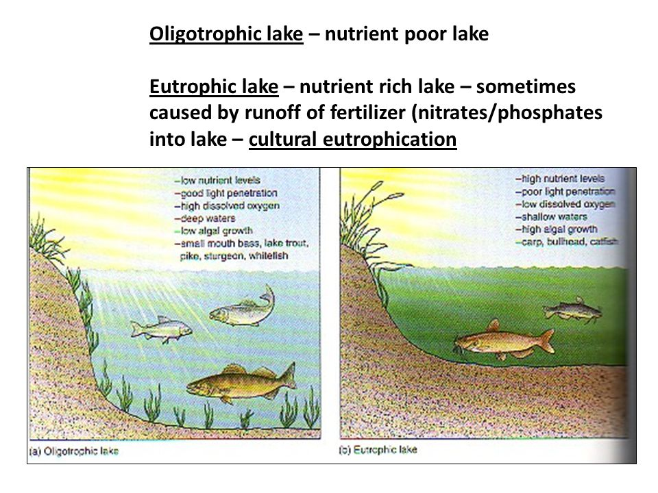 Oligotrophic lake – nutrient poor lake