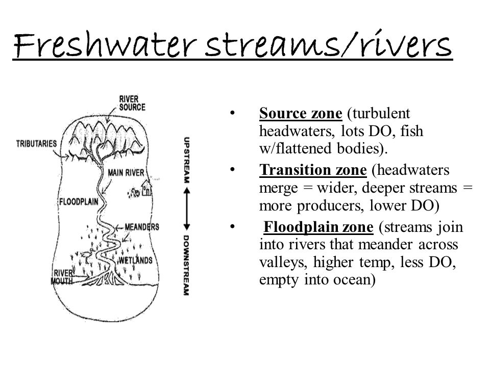 Freshwater streams/rivers
