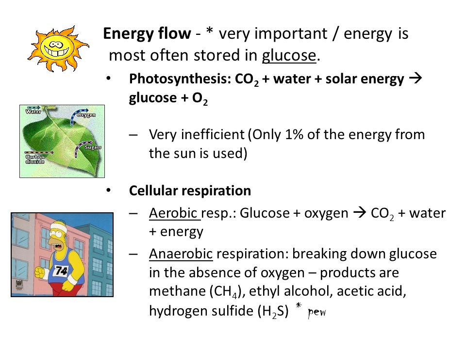 Energy flow - * very important / energy is most often stored in glucose.