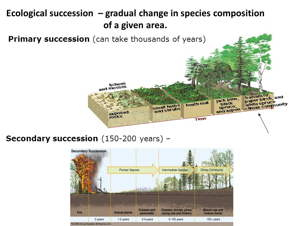 Ecological succession – gradual change in species composition of a given area.