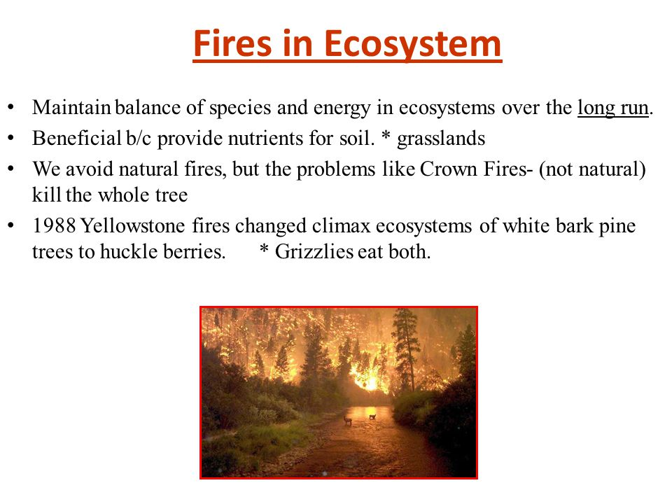 Fires in Ecosystem Maintain balance of species and energy in ecosystems over the long run. Beneficial b/c provide nutrients for soil. * grasslands.