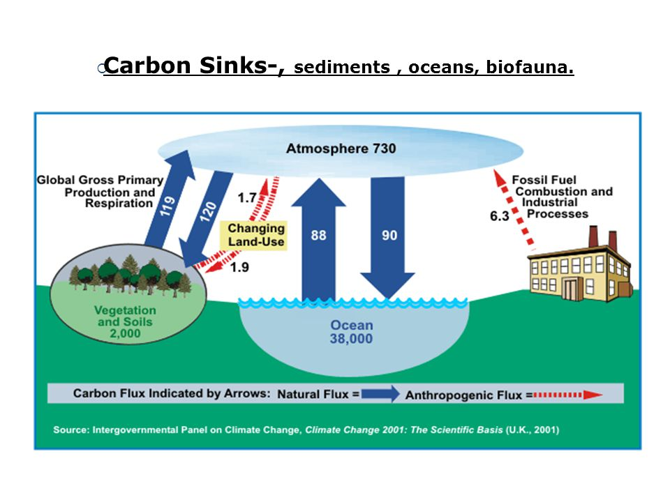 Carbon Sinks-, sediments , oceans, biofauna.