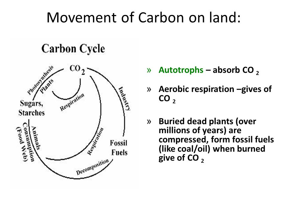 Movement of Carbon on land: