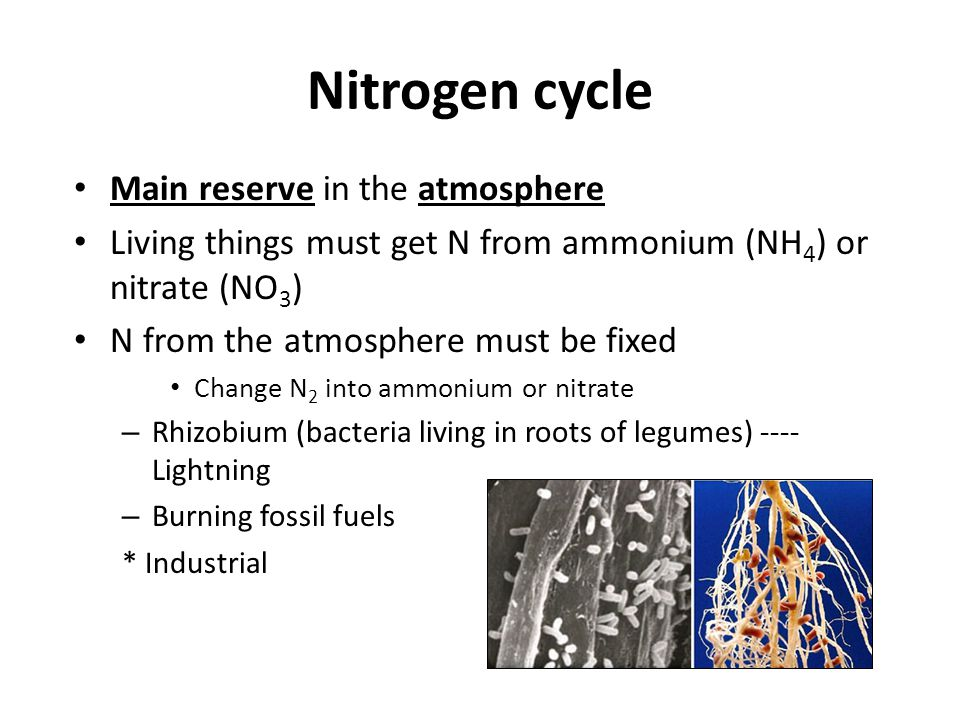 Nitrogen cycle Main reserve in the atmosphere