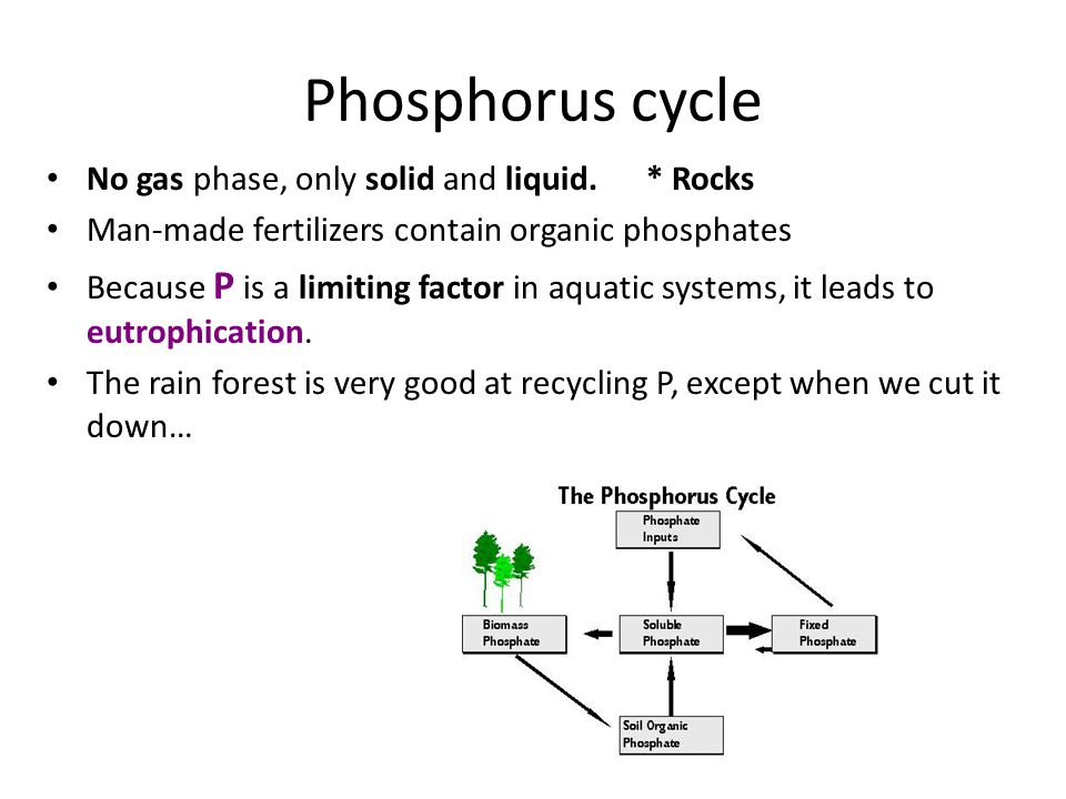 Phosphorus cycle No gas phase, only solid and liquid. * Rocks