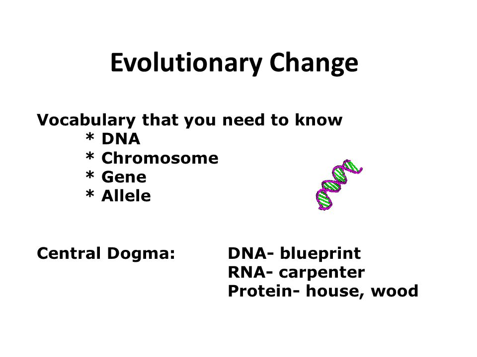 Evolutionary Change Vocabulary that you need to know * DNA