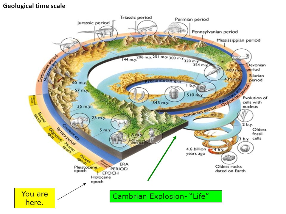 Geological time scale You are here. Cambrian Explosion- Life