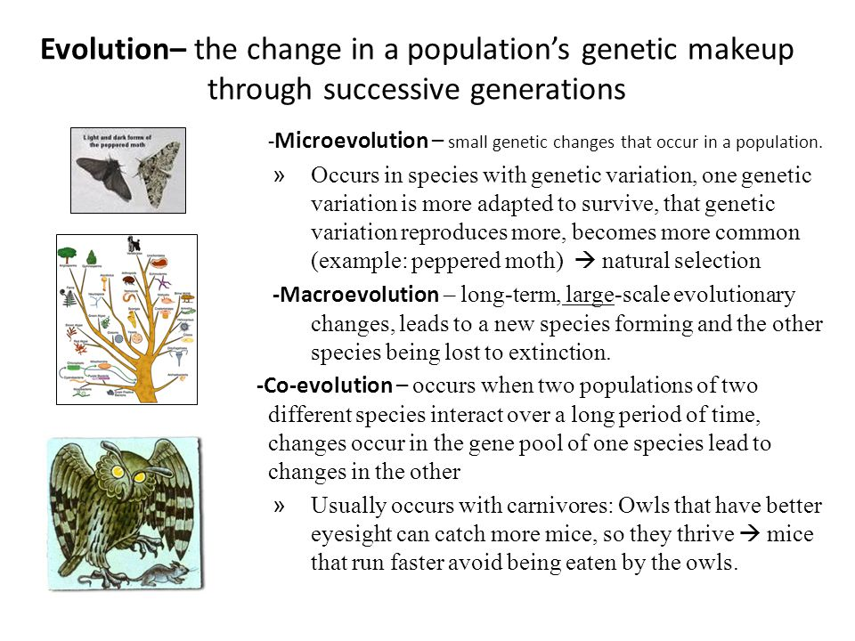 Evolution– the change in a population's genetic makeup through successive generations