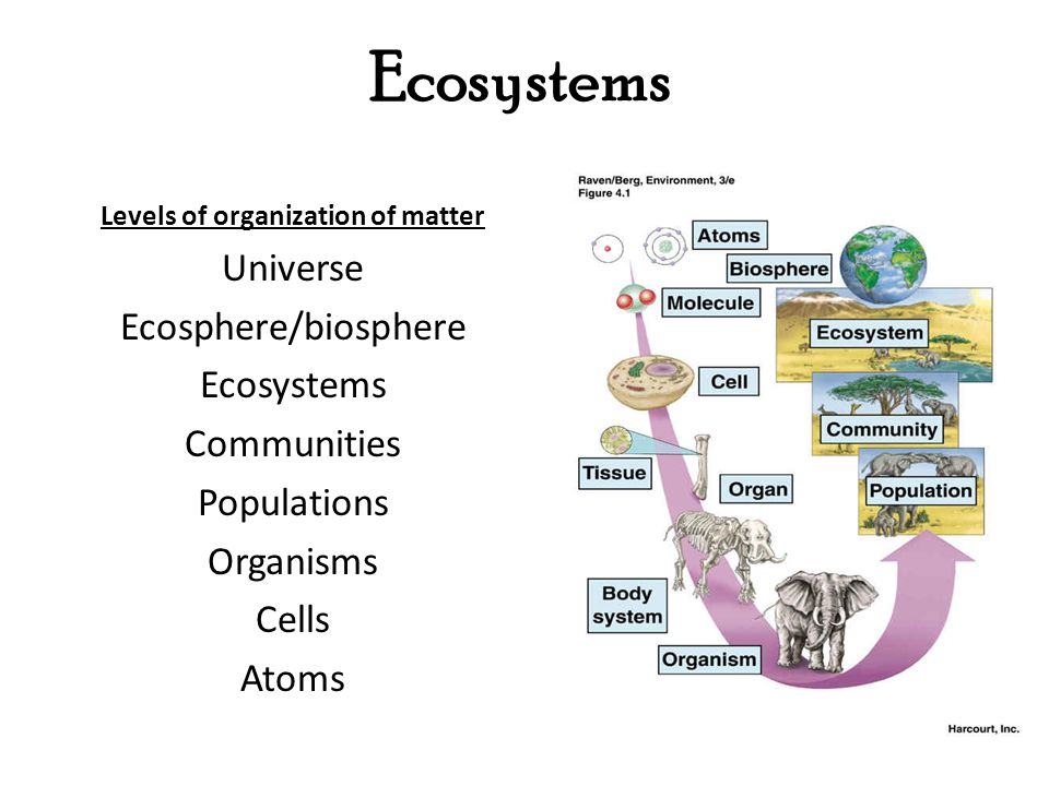 Levels of organization of matter