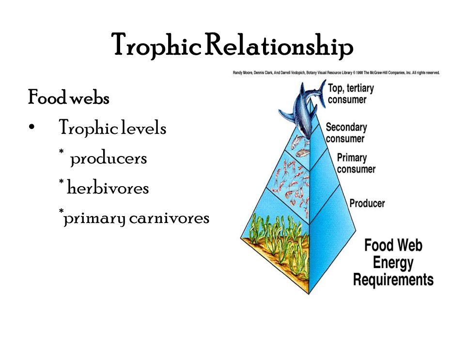 Trophic Relationship Food webs Trophic levels * producers * herbivores