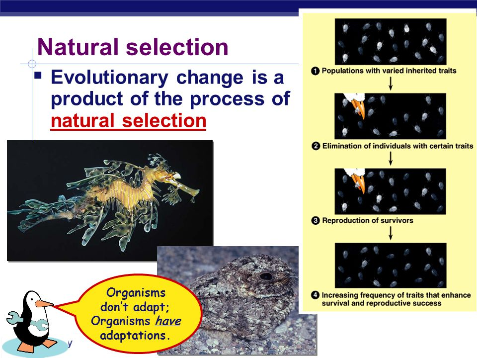 Organisms don't adapt; Organisms have adaptations.