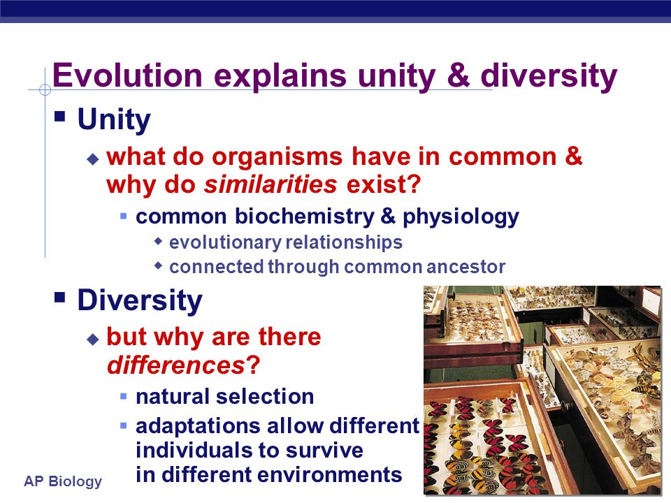 Evolution explains unity & diversity