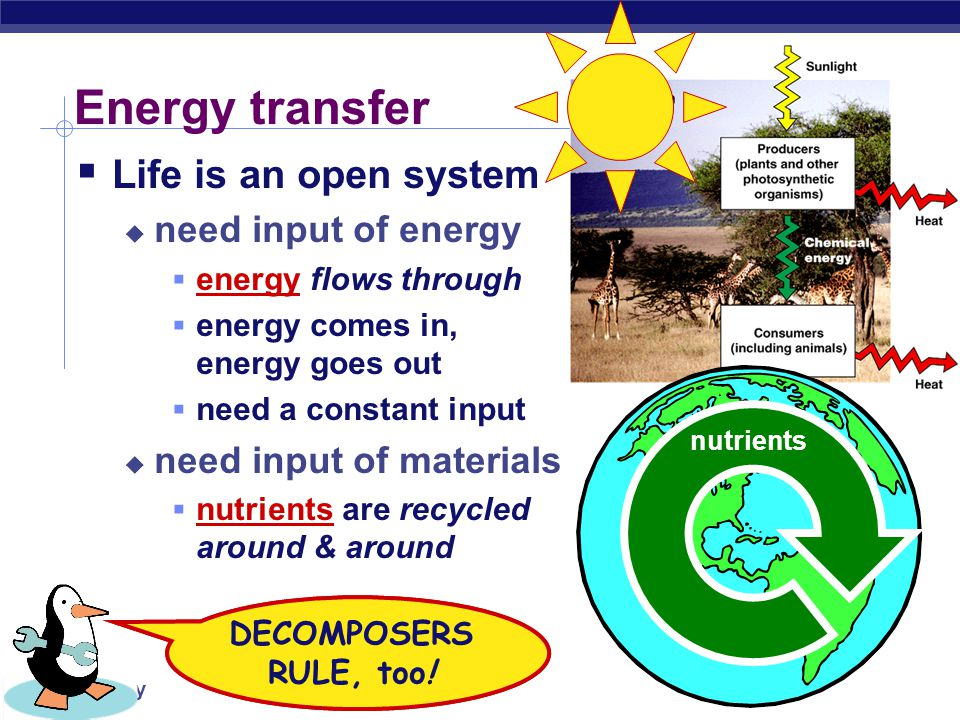 Energy transfer Life is an open system need input of energy