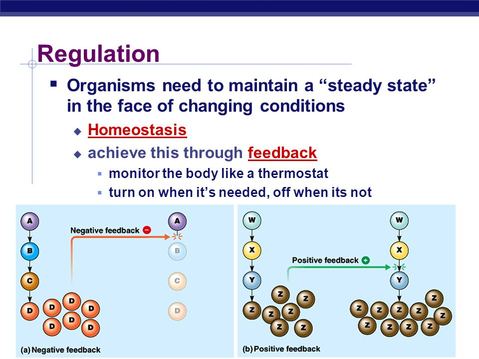 AP Biology Regulation. Organisms need to maintain a steady state in the face of changing conditions.