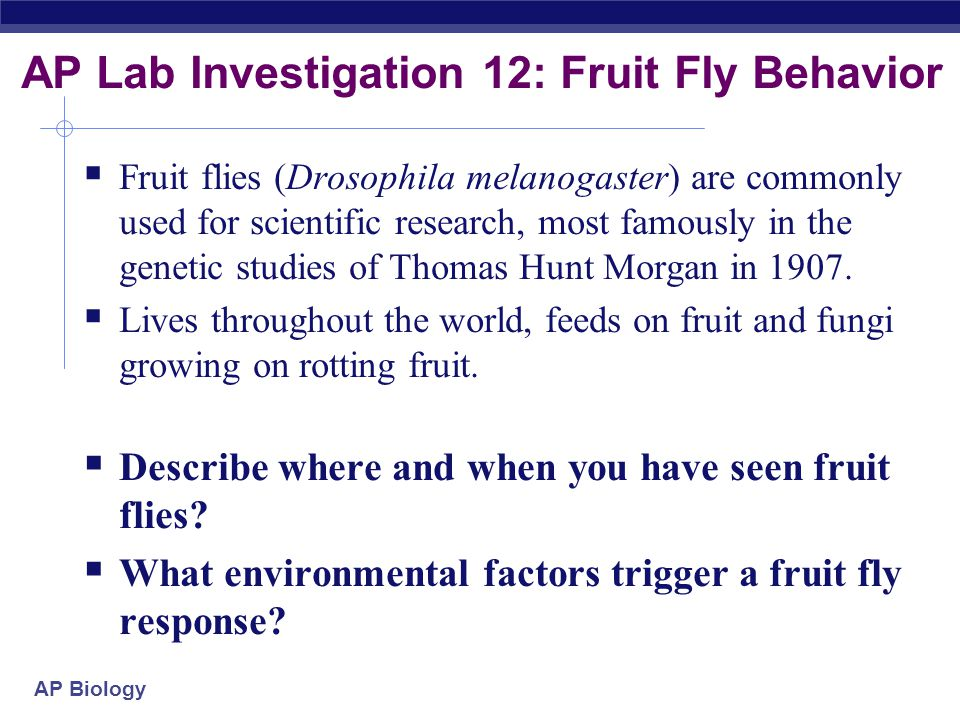 AP Lab Investigation 12: Fruit Fly Behavior