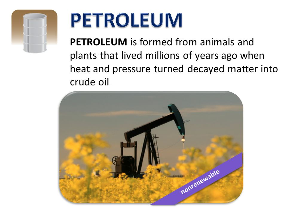 PETROLEUM PETROLEUM is formed from animals and plants that lived millions of years ago when heat and pressure turned decayed matter into crude oil.
