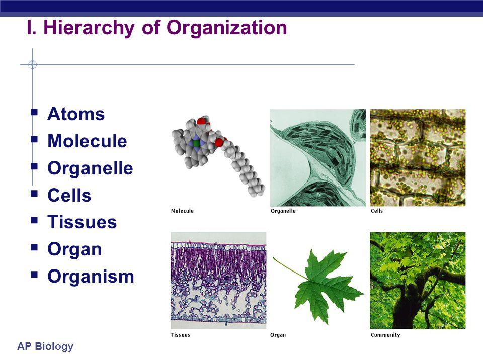 I. Hierarchy of Organization
