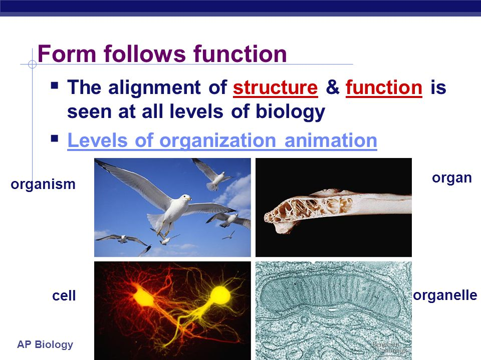 Form follows function The alignment of structure & function is seen at all levels of biology. Levels of organization animation.